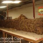 cigar-filler