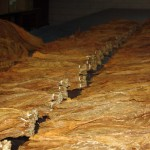 Sorted Tobacco