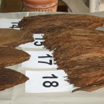 Various types of tobacco