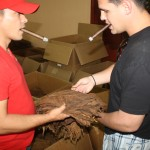 Jason inspects tobacco for use in our cigars...